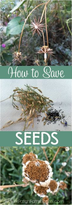 Seed saving is a fantastic way to get more plants for next Summer. Easy to collect and store. I share how I gather seeds and keep them well marked for planting and even some links to printable seed packets to share with others. Great gifts.