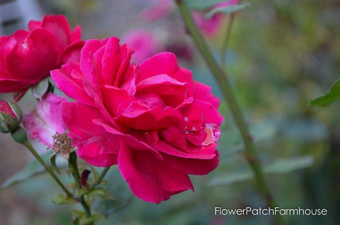 my-garden-in-september-14-of-36