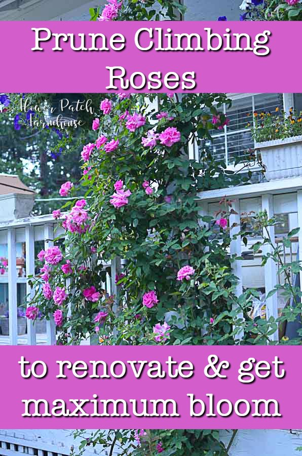 Prune Train Your Climbing Rose Flower Patch Farmhouse