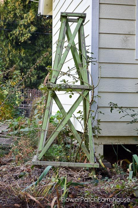 How to Pillar a Rose for vertical interest in the garden. Great for smaller spaces and anyone who can never have too many roses.