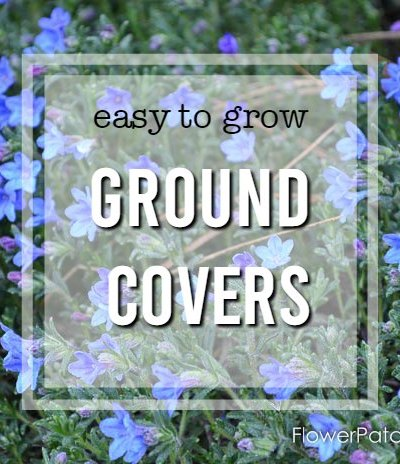 easy ground cover plants you can grow, flower patch farmhouse