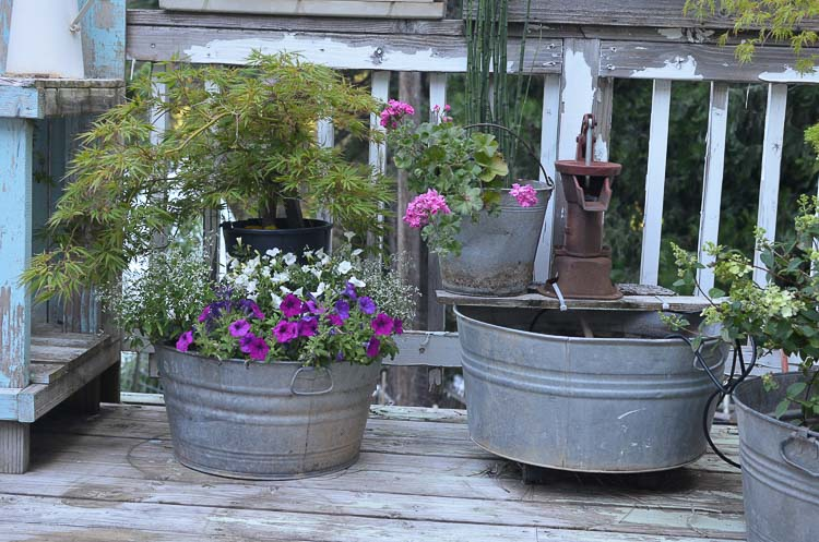 Attirant Galvanized Tubs And Buckets Container Garden