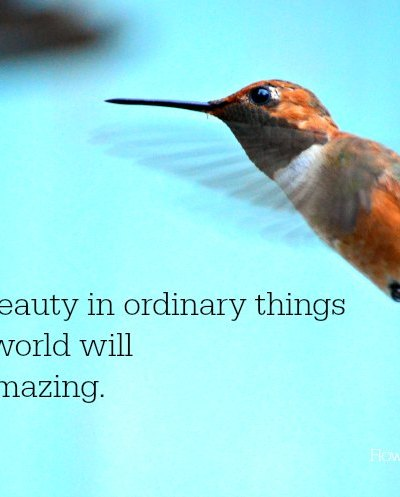 Look for beauty in ordinary things, Rufous hummingbird in flight.