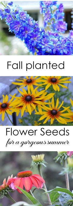 Sow your Seeds in Fall. Get a head start on summer but planting these flower seeds in Fall. My tired and true favorites I grow in my garden.