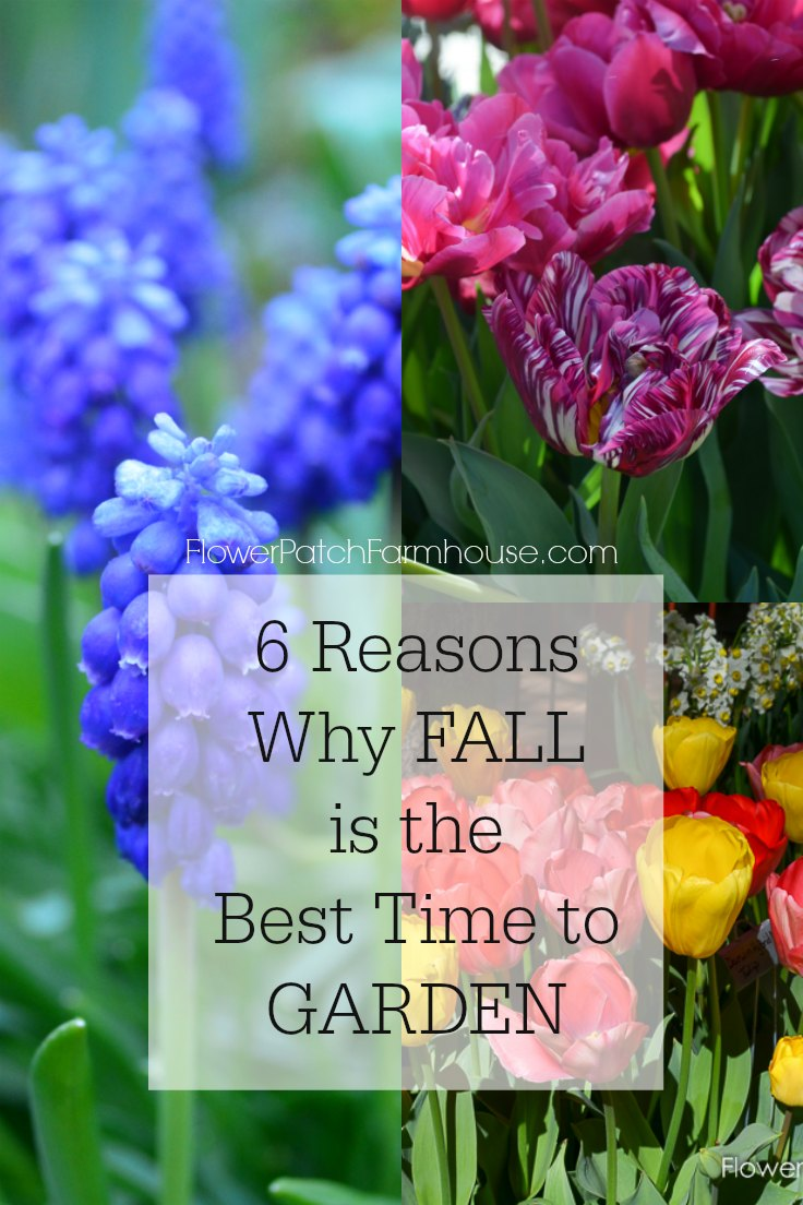 #Fall is the best time to #Garden and here is six reasons why as well as tips to create the best soil for Spring planting.  My tested techniques to make gardening more fun.