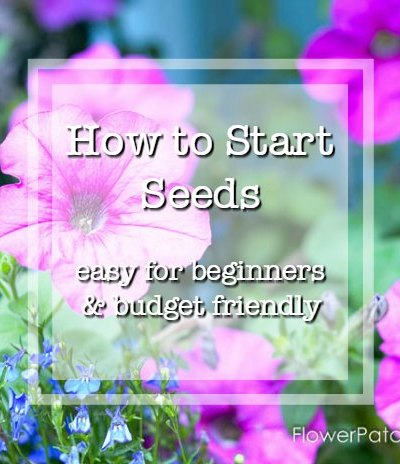 Pink petunias with text overlay, how to start seeds, easy for beginners and budget friendly