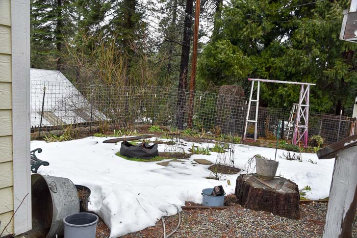 Secret Garden behind the house, Garden Journal 2018