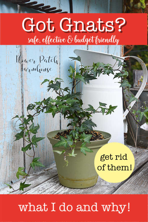 Needlepoint Ivy with white pitcher, FlowerPatchFarmhouse.com