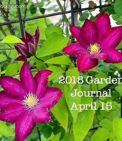 Garden Journal April 15 2018