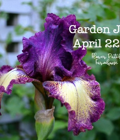 Iris Garden Journal April 22, 2018