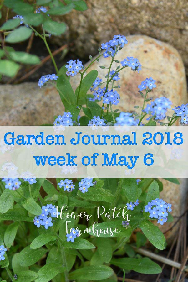 My Garden Journal has been so much fun. I love seeing how my garden is progressing week by week.  #garden #cottagegarden #smallspacegardening