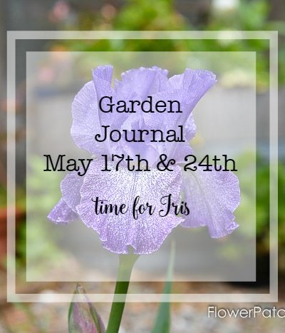 Garden Journal May 17th and 24th