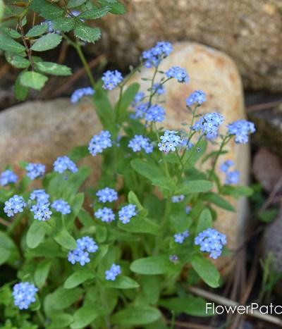 Garden Journal Update May 6th