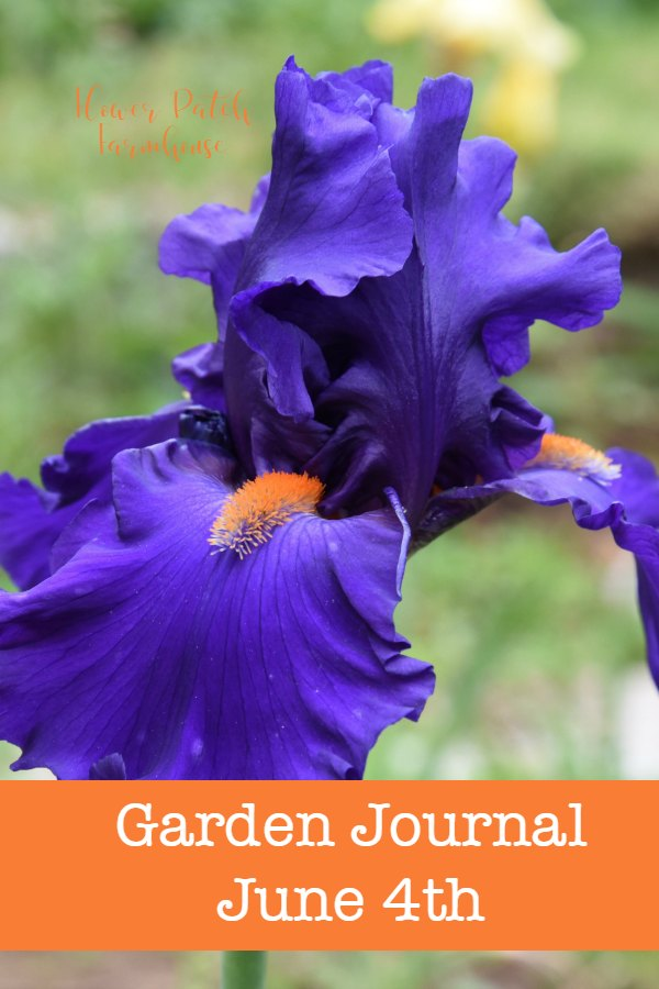 Garden Journal June 4th Update for Flower Patch Farmhouse, lots going on in the garden this week! #gardentour #smallgardenideas #cottagegarden