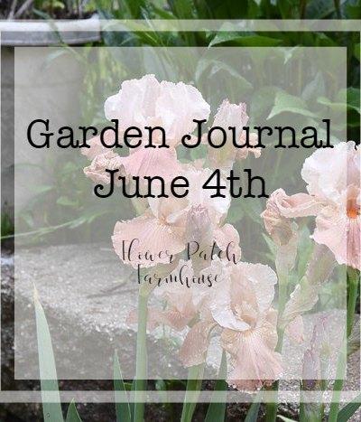 Garden Journal June 4th Update