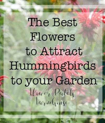 Flowers That Attract Hummingbirds to My Garden