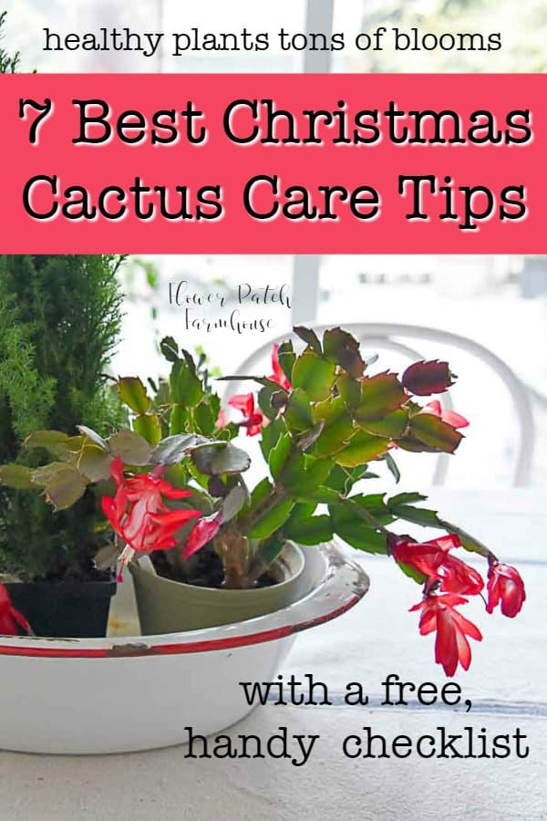 7 Best care tips for your Christmas cactus. Keep your holiday cactus healthy and enjoy fabulous winter blooms! Simple and easy tips and tricks plus a free, handy printable checklist. #christmascactus #indoorplants #gardening