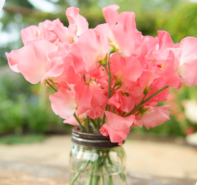 sweet peas in jar, easy sweet peas you can grow