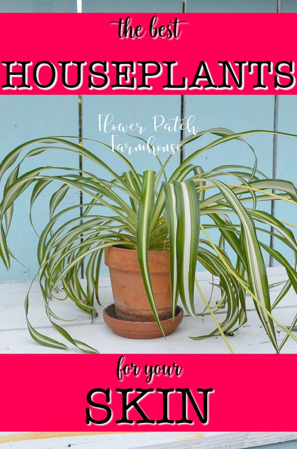Spider plant with text overlay, Best plants for your skin,