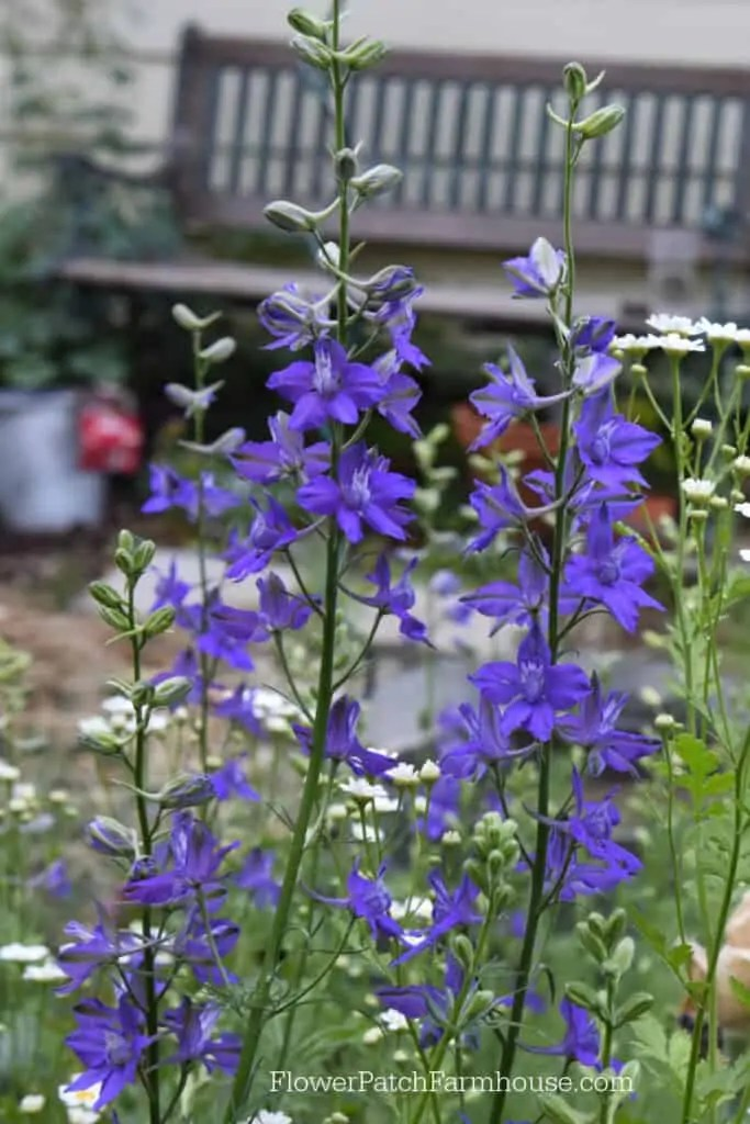 Sow Your Seeds In Fall For A Beautiful Garden Flower Patch Farmhouse