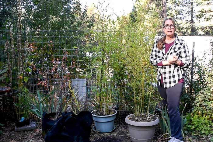 bamboo plants in Secret Garden