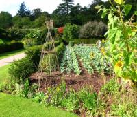Backyard Garden Ideas Vegetables Photograph