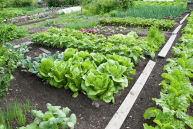 Easy Vegetable Garden Container Vegetable Gardening – The Easy Way
