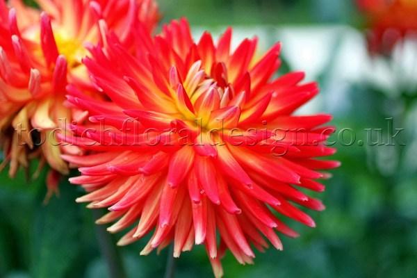 spring flowers uk garden