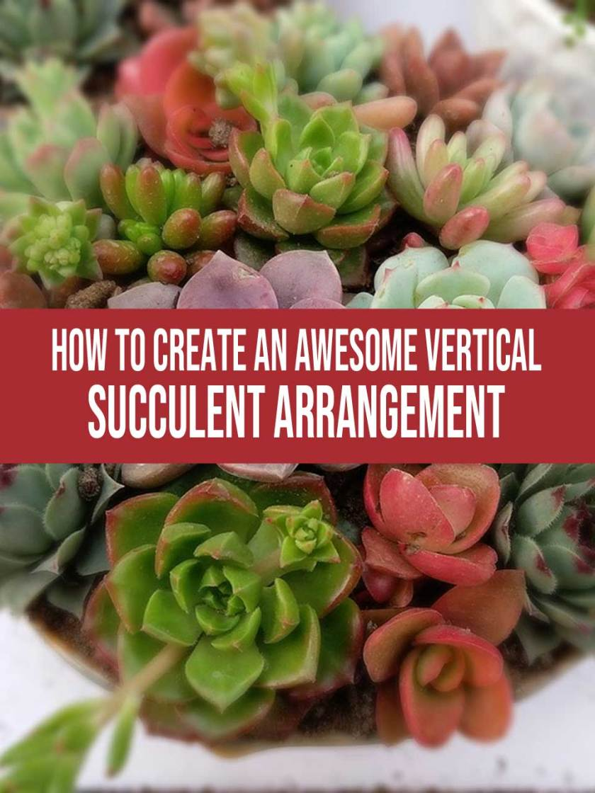 vertical succulent arrangement