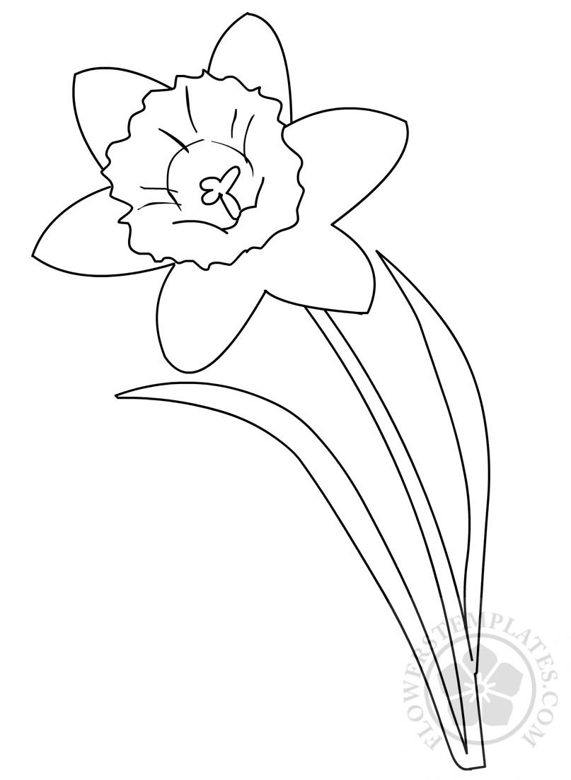 daffodil-leaves-stem