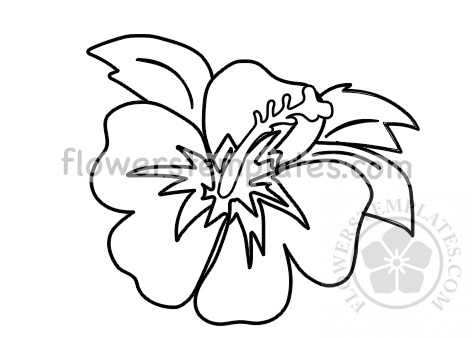 Hawaiian Hibiscus Coloring Page Flowers Templates
