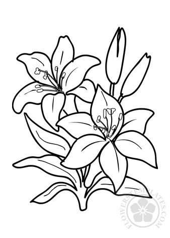 Two Lilies Flower Coloring Page Flowers Templates
