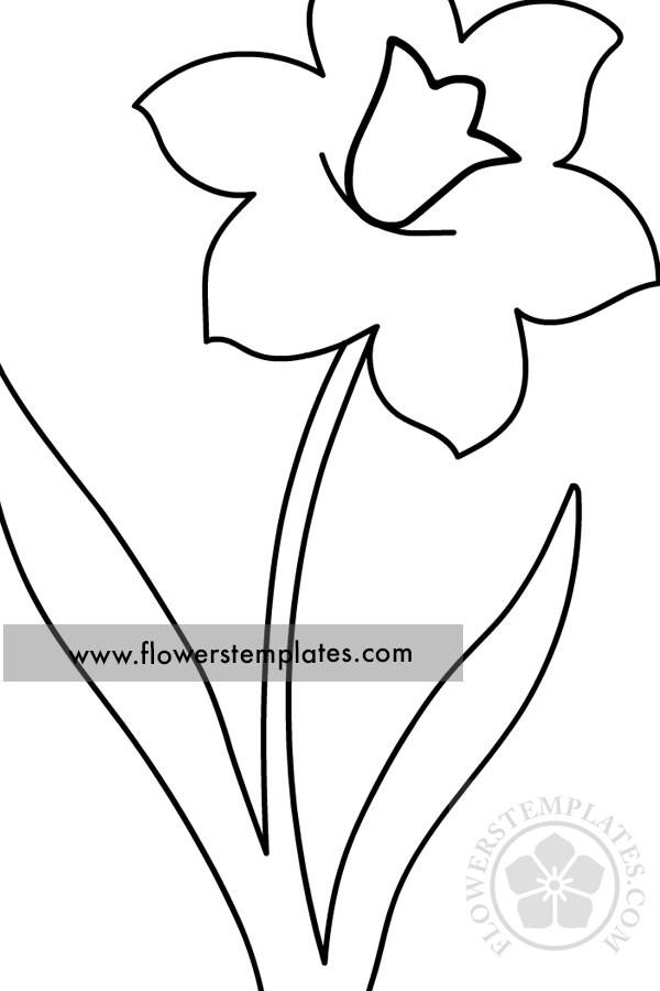Daffodil with stem