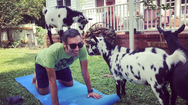 Summerville Goat Yoga - Flowertown Charm