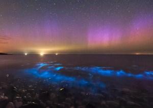 Bioluminescent waves & aurora borealis