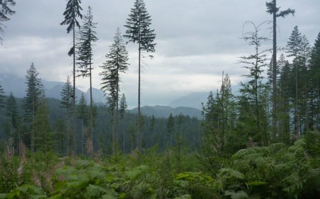 Freeride Mountain Bike Kanada BC Squamish