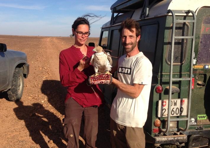 Etwas Falknerlehre in der Wüste bei Zag