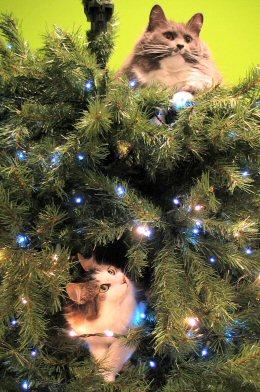 A Cats Christmas