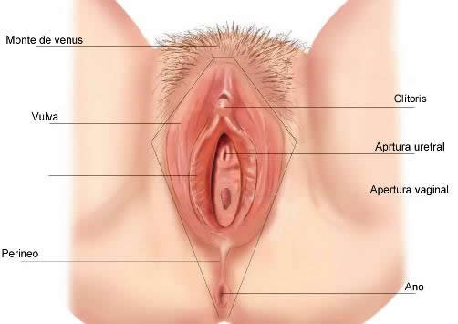 Auto-Examen De Vulva Y Vagina  Flujo Vaginal-3194
