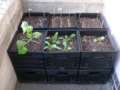 photo credit: http://milkcratedigest.com/2010/04/27/milkcrate-container-gardening/