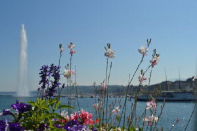 Lago de Ginebra. Propiedad de Fly and Grow