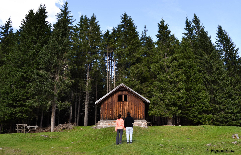 Bosque de Paneveggio