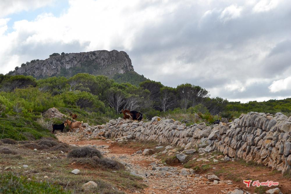 Camino a subida a la Talaia Son Jaumell