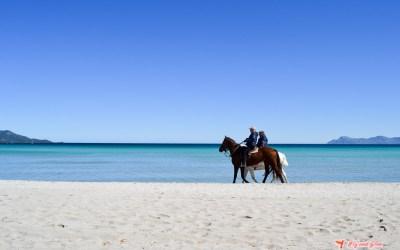 Mallorca en 4 días – escapada al paraíso