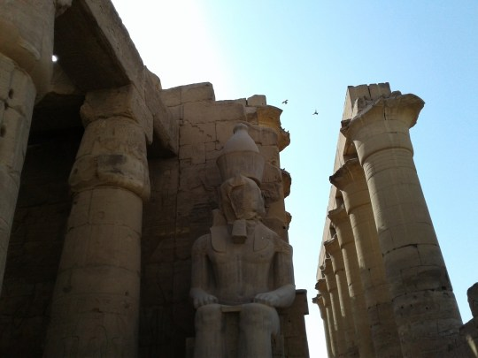 birds-and-pharaoh-_-temple-at-luxor-_-ernest-white-ii