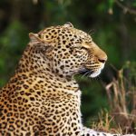 Bestway is Great for Tours and Safaris