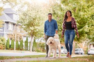 couple walking a poodle
