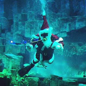 Père Noël tropiques