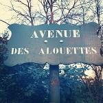 Un dimanche à Paris.