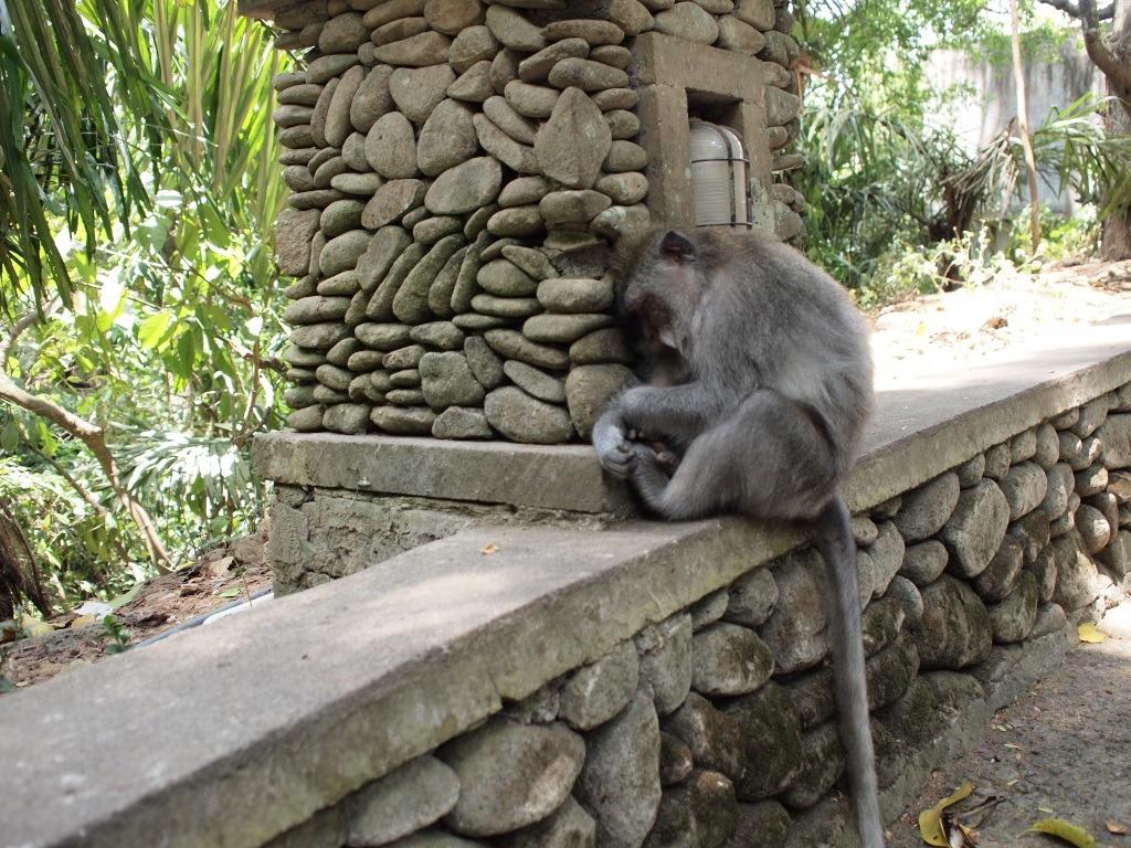 Monkey Forrest Bali ubud